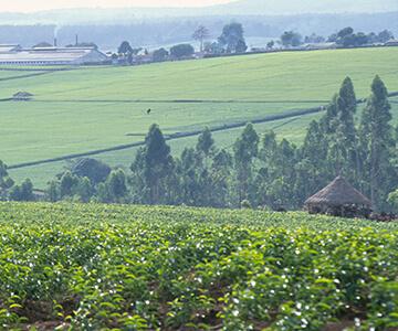 The Salada Tea Garden Tour