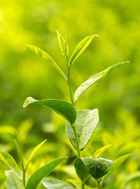 Nos engagements écologiques