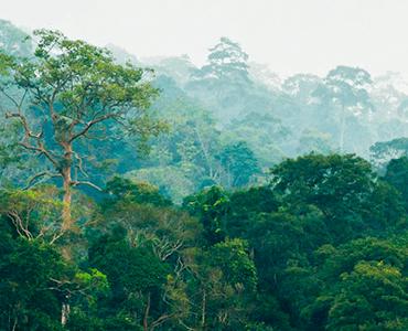 Le certification Rainforest Alliance